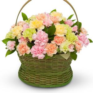 카네이션혼합꽃바구니
