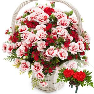 카네이션혼합꽃바구니+코사지